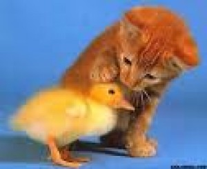 kitten-with-chick.jpg