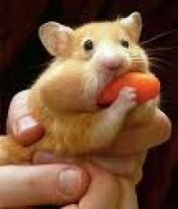hampster-with-a-carrot.jpg
